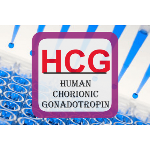 human chorionic gonadotropin h cg essay Human chorionic gonadotropin human chorionic gonadotropin is otherwise known as hcg, which is a hormone that women produce during pregnancy there are many effects.