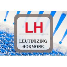 Luteinizing Hormone ELISA - LH