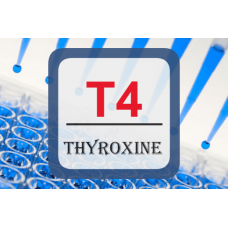 Thyroid Hormone ELISA - T4