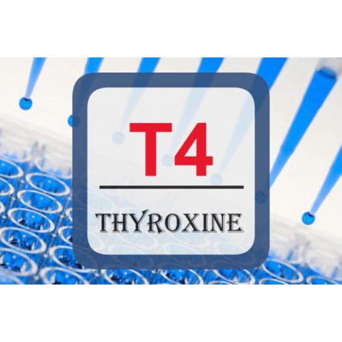 Thyroid Hormone Elisa T4 Elisa Thy E B03 United Immunoassay