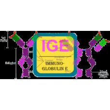 IgE Antibody (mAb) - Mouse