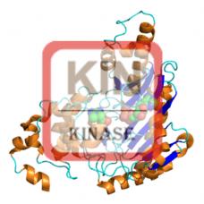 Creatine Kinase (BB) Antibody (pAb) - Rabbit