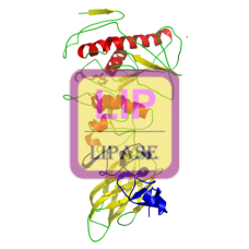 Lipase (Pancreatic) Antibody (mAb) - Mouse