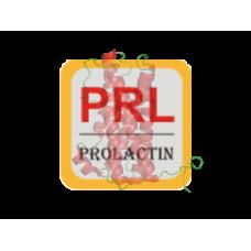 Prolactin Antibody (mAb) - Mouse