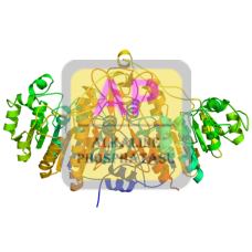 Alkaline Phosphatase Antibody (pAb) - Goat
