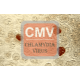 Chlamydia Antibody (mAb) - Mouse