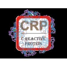C-Reactive Protein Antibody (pAb) - Rabbit