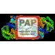 Prostatic Acid Phosphatase Antibody (mAb) - Mouse